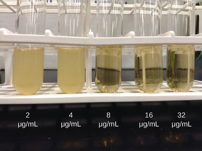 In a dilution test, the lowest dilution that inhibits turbidity (cloudiness) is the MIC. In this example, the MIC is 8 μg/mL. Broth from samples without turbidity can be inoculated onto plates lacking the antimicrobial drug. The lowest dilution that kills ≥99.9% of the starting inoculum is observed on the plates is the MBC.