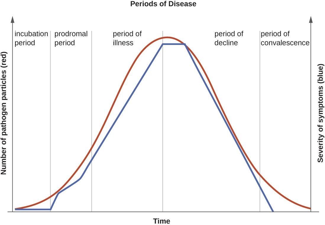 The progression of an infectious disease can be divided into five periods, which are related to the number of pathogen particles (red) and the severity of signs and symptoms (blue).