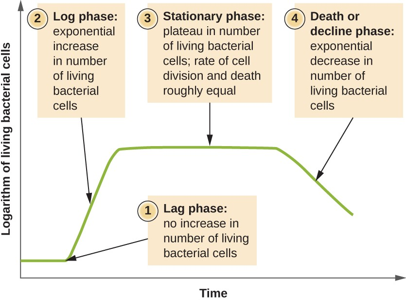 The growth curve of a bacterial culture is represented by the logarithm of the number of live cells plotted as a function of time. The graph can be divided into four phases according to the slope, each of which matches events in the cell. The four phases are lag, log, stationary, and death.